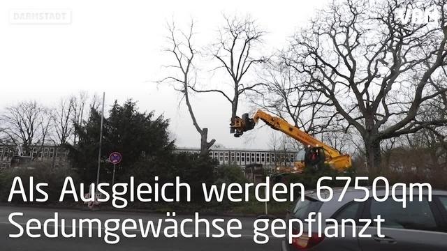 Bäume müssen Lichtwiesenbahnbau weichen