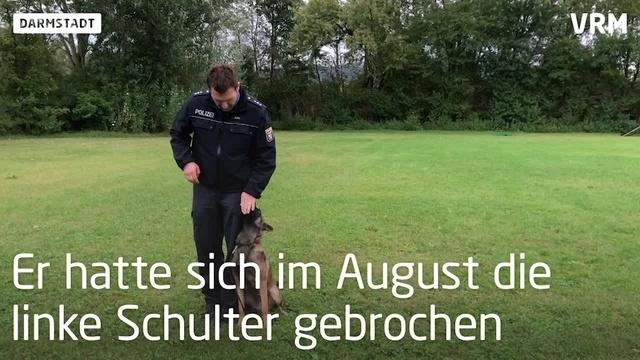 Vom Welpen zum Polizeihund