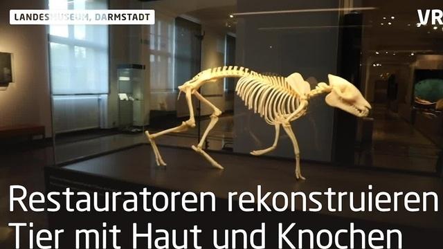 Urpferd 2.0 im Hessischen Landesmuseum