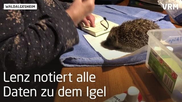 Igel in Not finden bei Marion Lenz ein Zuhause