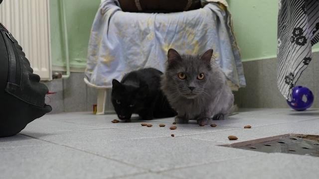 Katzenduo verlässt das Tierheim nur gemeinsam