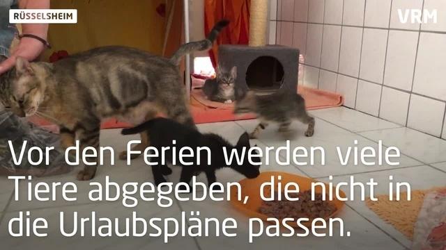 Rüsselsheim: Ein Herz für Tiere