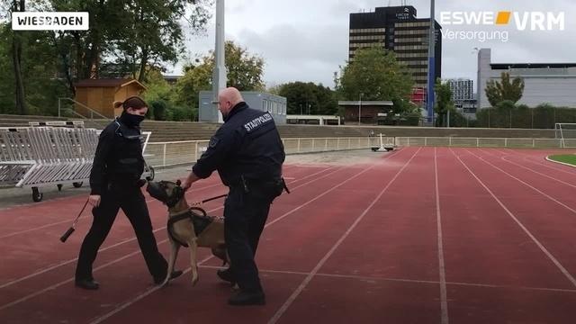 Wiesbaden: Unterwegs mit dem Polizeihund