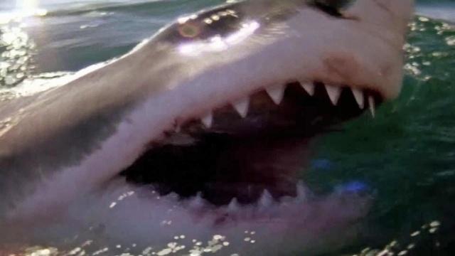 Wenn Haie angreifen - Florida