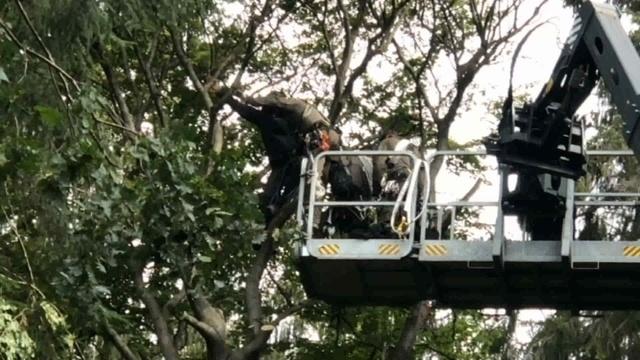 20 Festnahmen: So lief Rodungs-Tag zwei im Herrenwald