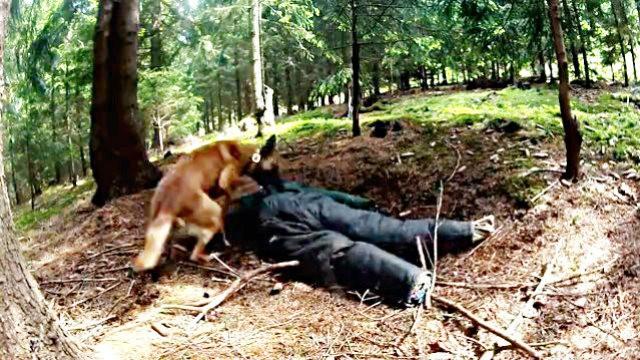 Vermisstensuche mit der Hundestaffel