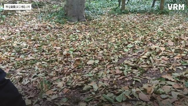 Worms: Der Wald im Klimastress - Teil zwei