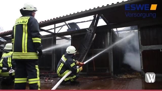 Wallau: Zehn Verletzte bei Brand auf Fohlenhof in