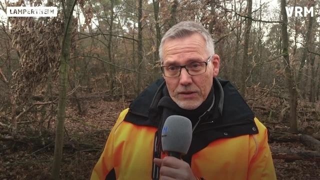 Massive Schäden im Bürstädter Wald