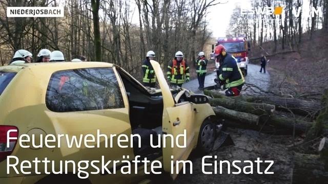 Nach Sturmtief stürzt Baum auf Auto