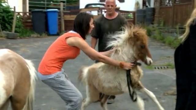 Tierschützer gegen Pferdehalter