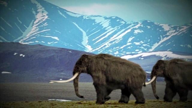 Die Wiedergeburt der Mammute