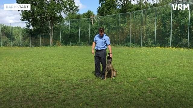 Darmstadt: Vom Welpen zum Polizeihund