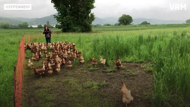 Eierhof Arnold mit 900 Hühnern in Freilandhaltung