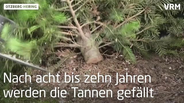 Weihnachtsbaumverkauf startet in Otzberg-Hering