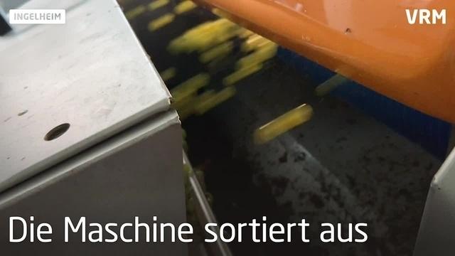 Weingut setzt neue Sortiermaschine ein