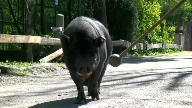 Monsterschlau: Keine Langeweile im Tierpark
