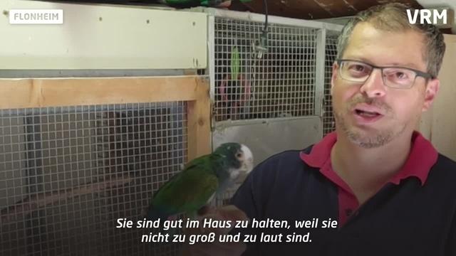 Papageienzucht in Flonheim – ein zeitaufwendiges Hobby