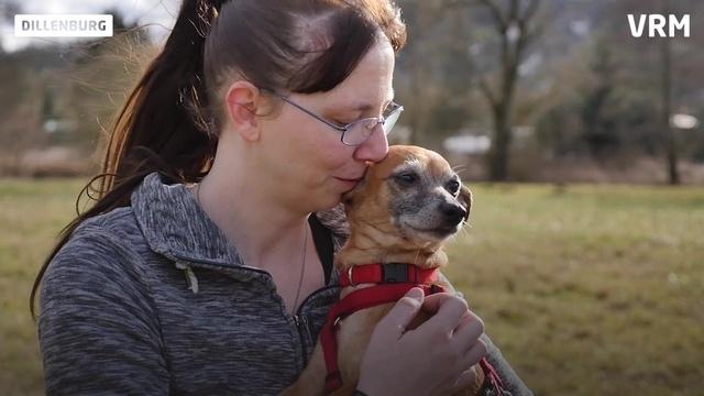 Pinscher mit Power: Cindy sucht Zuhause