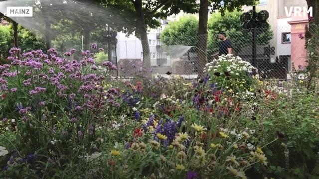 Mainz: Einsatz für durstige Pflanzen und Bäume