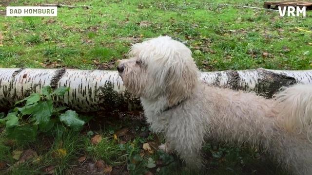 Wie funktioniert eine Dogsitting-Agentur?