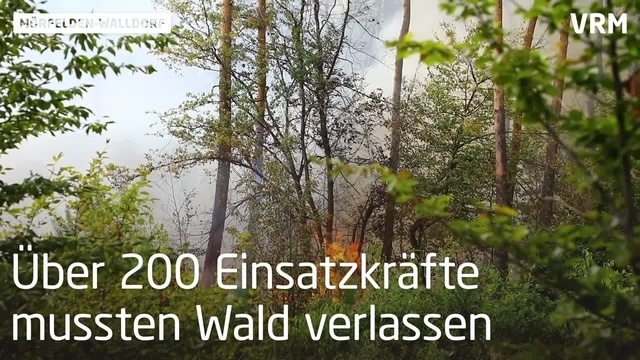 Großbrand im Wald bei Mörfelden-Walldorf