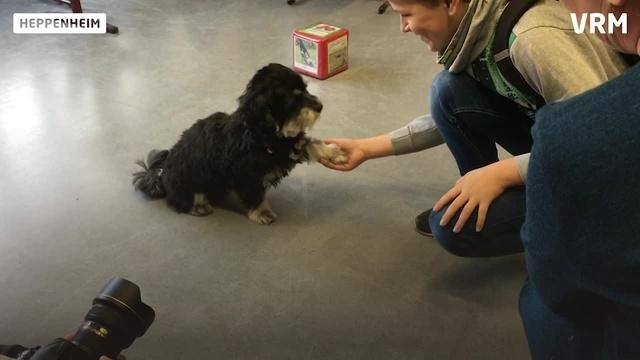 Heppenheim: Ein Hund als Lehrer an der Siegfriedschule
