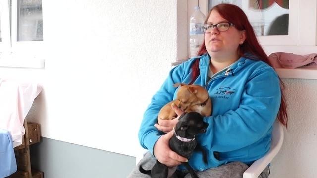 Animal Hoarding: Tierheim Gießen vermittelt Chihuahuas