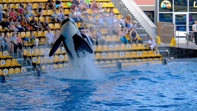 Befreit die Wale!