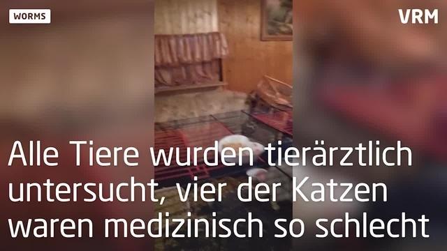 40 Katzen aus Wormser Wohnung befreit