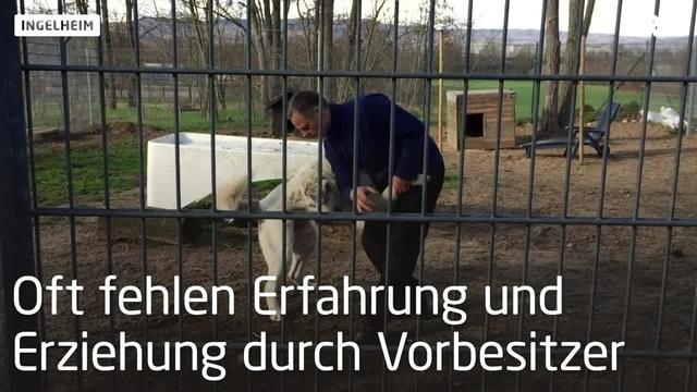 Zu Besuch bei den Tierhelfern Ingelheim e.V.