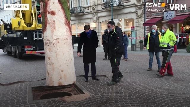 Der Wiesbadener Weihnachtsbaum ist da
