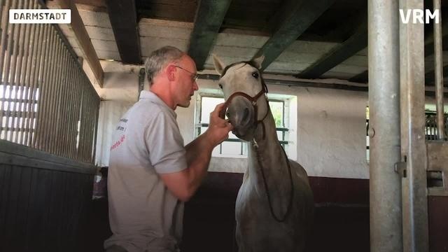 Den Pferden auf den Zahn gefühlt