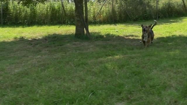 Wulle will weg aus dem Tierheim