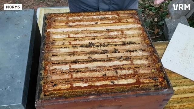 Worms: Winterliche Bienenpflege