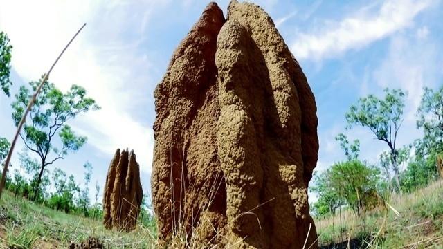 Die Kathedralen der Termiten