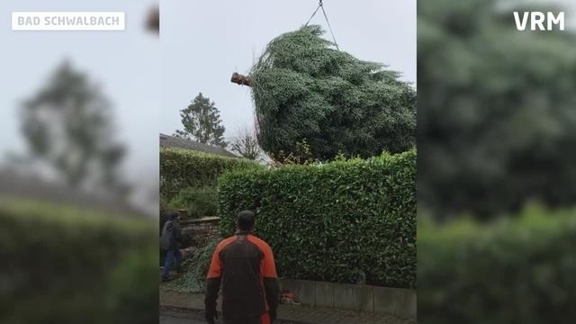 Fällung einer 12-Meter-Tanne in Bad Schwalbacher Vorgarten