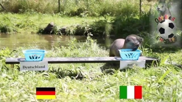 Ottilie orakelt: Italien schickt Deutschland heim