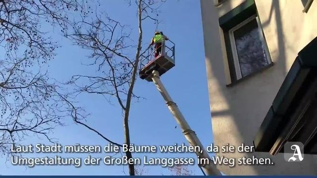 Mainz: Baumfällarbeiten in der Großen Langgasse
