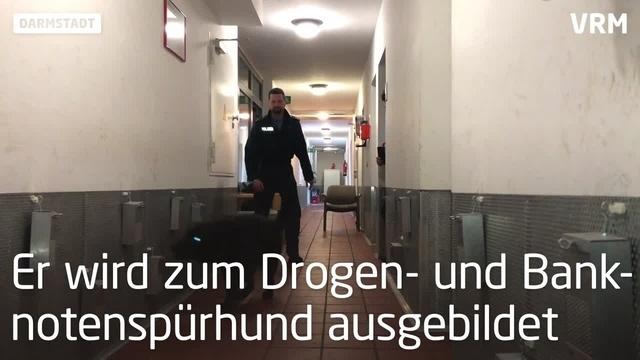 Polizeihund Chuck Norris wird zum Drogenspürhund