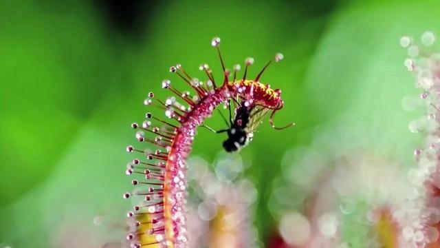 Die Tricks der Pflanzen 1