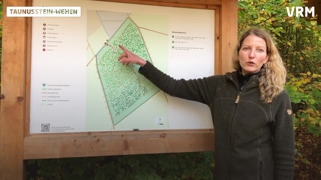 Taunusstein: Friedwald in Wehen vergrößert