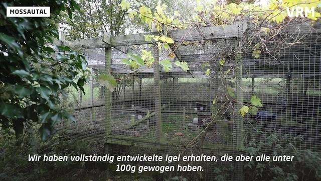 In der Igelburg Mossautal herrscht Hochbetrieb