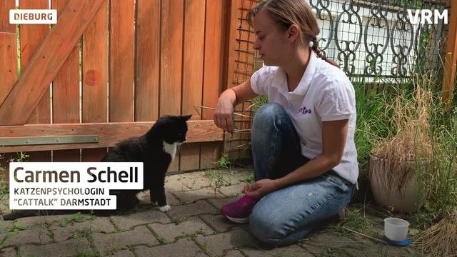 Expertin für Stubentiger versteht sich gut mit Katzen