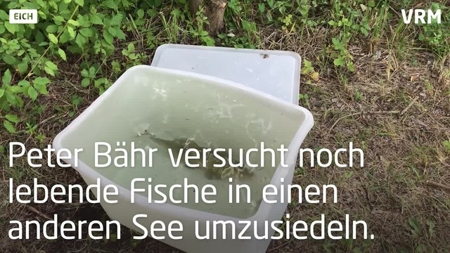 Eich: Fischsterben im Jägerloch