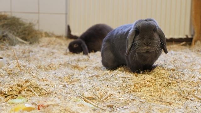 Kaninchen Nino und Naomi suchen ein Zuhause
