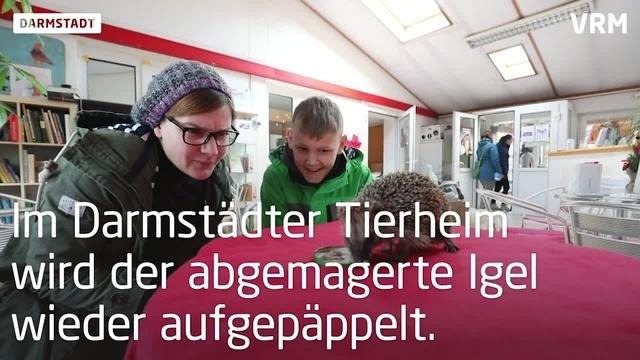 Darmstädter retten Glücks-Igel Karl