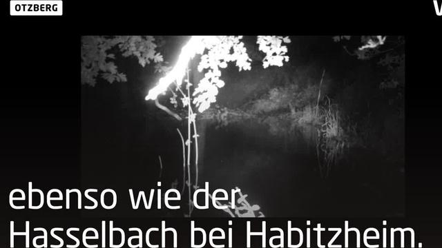 Nachtaktiv: Der Biber bei Otzberg