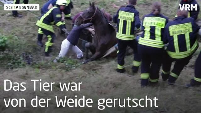 In Bach eingesunken: Feuerwehr rettet Pferd