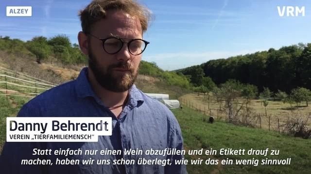 Alzey: Weine werden nach Schafen benannt